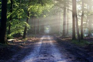 Light to my path image